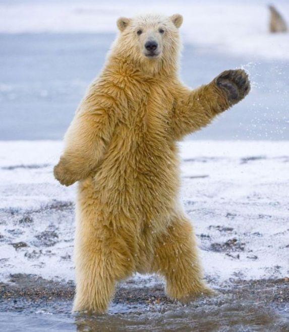 danza del oso.jpg