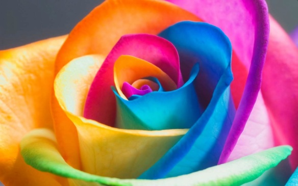rosa-multicolor.jpg